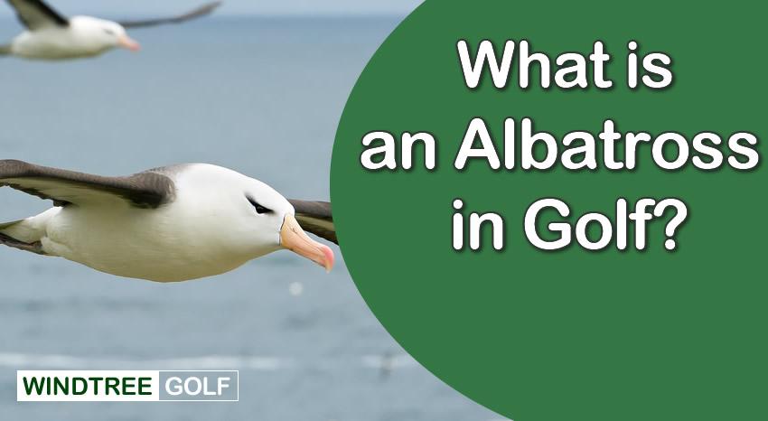 albatross in golf