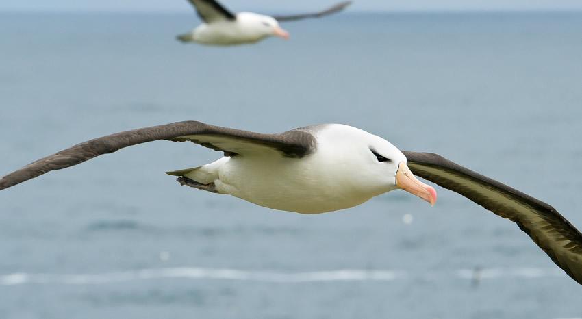 what-is-an-albatross-in-golf